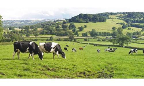 上市1年的金领冠塞纳牧,缘何成为有机奶粉的标杆?
